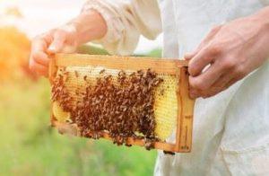 OCOPA Emballage installe une ruche dans l'entreprise  : un projet d'entreprise innovant